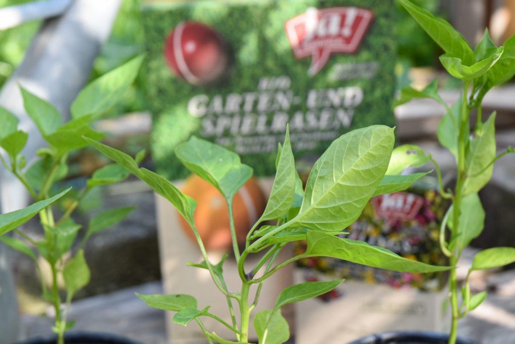 der Gemüsegarten im Sommer   gesunder Boden und Artenvielfalt