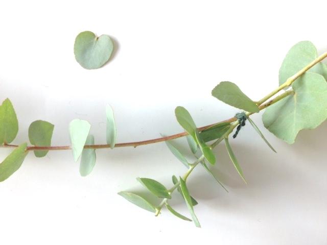 Kranz aus Eukalyptus selbst binden | Herbst DIY