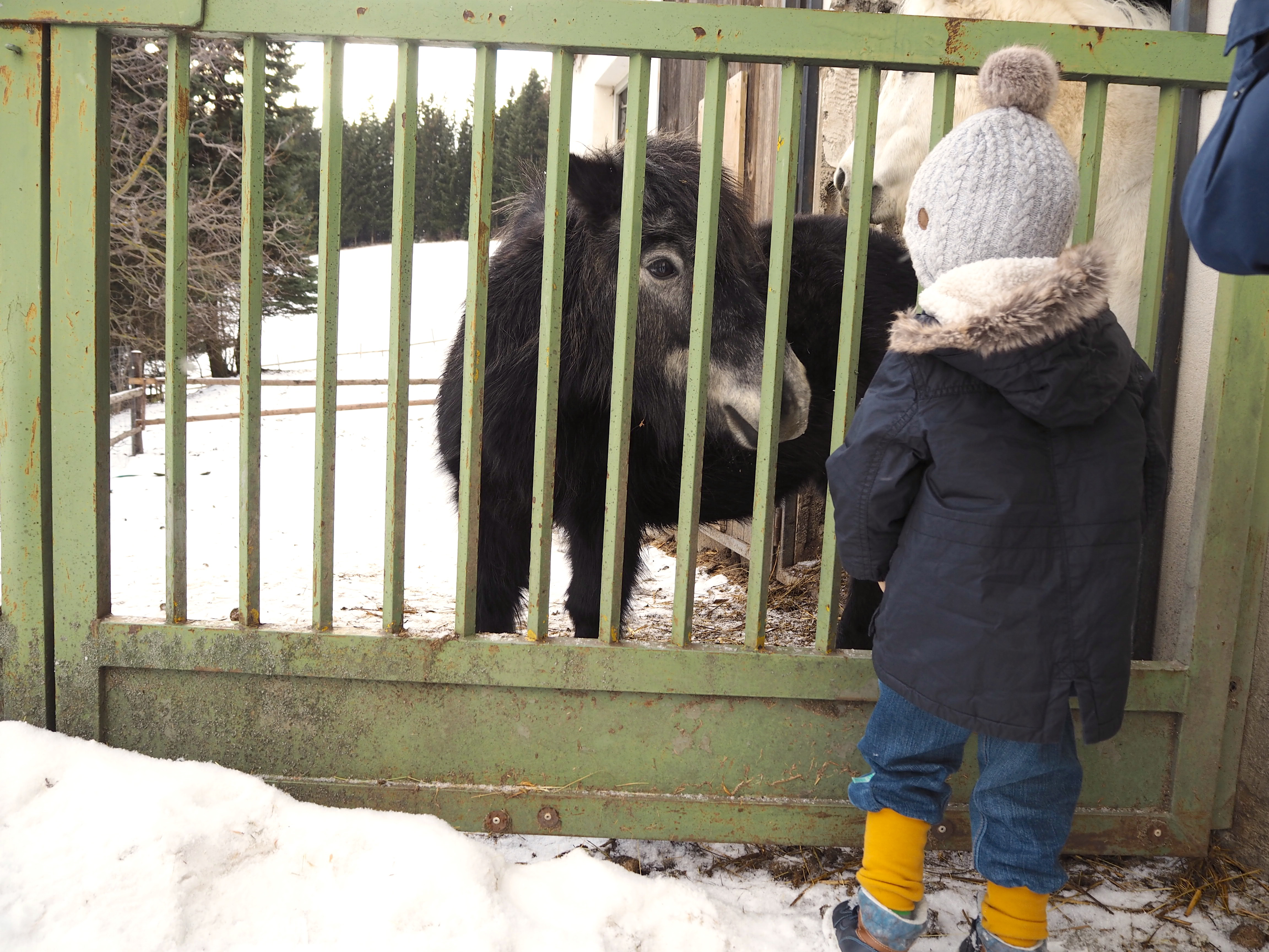 zu Besuch im Joglland   FamilienSkigebiet St.Jakob im Walde