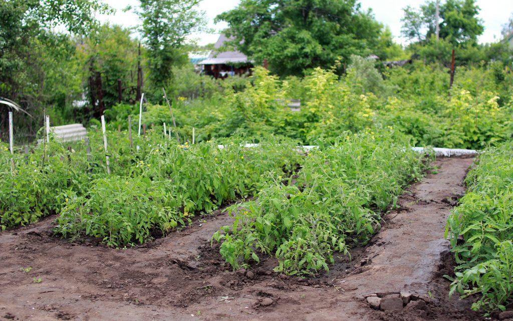 Ein Mietgarten für dein Gemüse | TIPPS rund um die Ackerparzelle